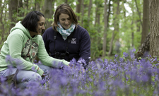 Two women kneel in the bluebells beneath a woodland canopy