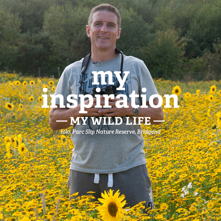 Iolo stands in a field of sunflowers